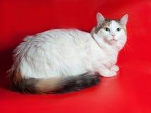 Dikke witte kat met vlekken die op rood zitten Royalty-vrije Stock Fotografie