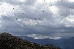 Dikke wolk van meeuwen Stock Foto
