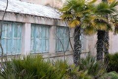 A dilapidated orangerie in Baku Botanic gardens with palm trees Royalty Free Stock Photo