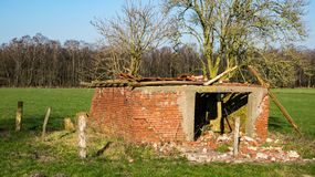 Dilapidated shed with elder bush in a meadow stock photo