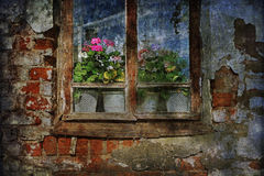 Dilapidated Windows, fresh flowers Royalty Free Stock Photos