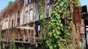 Facade of an abandoned wooden house covered with vegetation