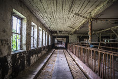 Dilapitated cowshed. An old deserted cow house of an LPG in Eastern Germany Stock Photo
