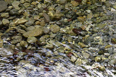 Dilar River Bed in Early Spring. Early spring water flows over the pebbled river bed of the Dilar river in Granada, Spain stock photo