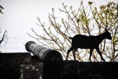 Dili Timor-Leste: canhão português velho pela praia dos cityfotografia de stock