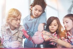 Diligent talented students learning how heart works Royalty Free Stock Images