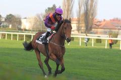 Dilinger nella corsa di cavalli a Praga fotografia stock