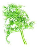 Dill. Dill bunch on white background (isolated Royalty Free Stock Photos
