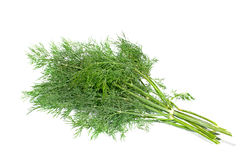 Dill Stockfotos