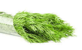 Dill Stock Image