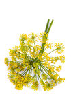 Dill Royalty Free Stock Photography