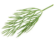 Dill Stock Photos