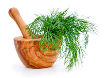 Dill. Wooden mortar with dill, on white background Royalty Free Stock Image