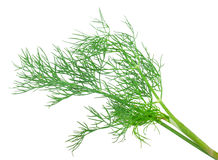 Dill Royalty Free Stock Images