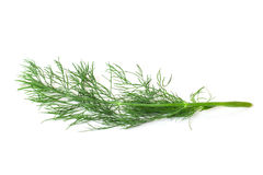 Dill. Dill twig on white background Royalty Free Stock Images