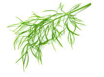 Dill. Isolated on white background stock photo