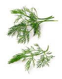 Dill. Stems isolated on white background Stock Photo