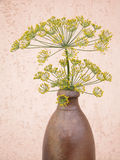 Dill. Fresh aromatic bunch of dill Royalty Free Stock Images