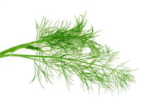 Dill. Fresh green dill isolated on white Royalty Free Stock Photo