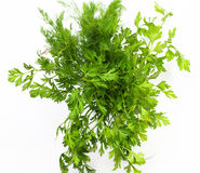 Dill And Parsley Royalty Free Stock Photography