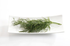Dill (Anethum graveolens) on plate Royalty Free Stock Images
