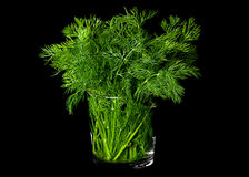 Dill aromatic herb on black Royalty Free Stock Photos