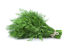 Dill aromatic herb Stock Photo