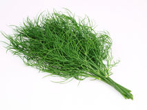 Dill. Aromatic plant harvested in my garden Stock Image