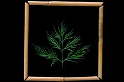 Dill. Bamboo framed shot on black background Royalty Free Stock Photography
