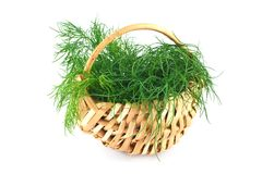 Dill in a basket Stock Images