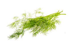 Dill branch Royalty Free Stock Images