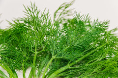 Dill closeup Royalty Free Stock Images