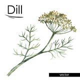 Dill color illustration Royalty Free Stock Photos