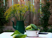 Dill and Cucumbers. Dill flowers and fresh cucumbers still life Royalty Free Stock Photos