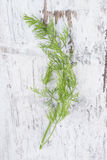 Dill. Culinary herbs. Stock Images
