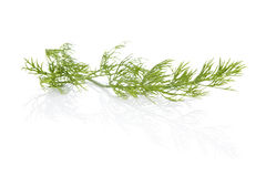 Dill. Culinary herbs. Stock Photo
