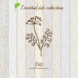 Dill, essential oil label, aromatic plant Royalty Free Stock Photo