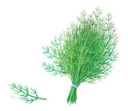 Dill or fennel Stock Photo