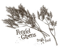 Dill, fennel vector logo design template. fresh Royalty Free Stock Images