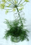Dill. Flowers in a bottle Stock Photo