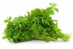 Dill. Green leaves. Stock Photos