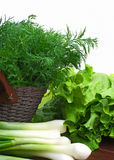 Dill, green onion and curly salad in the basket Stock Image