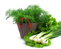 Dill, green onion and curly salad Royalty Free Stock Photography
