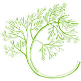 Dill hand drawn Stock Photo