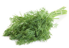 Dill herb Royalty Free Stock Image