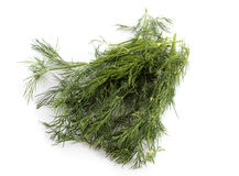 dill herb Arkivbilder