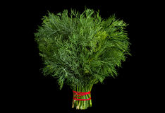 Dill herb on black Stock Images