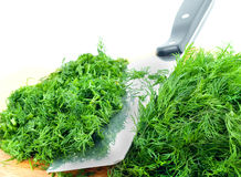 Dill herb cut  Royalty Free Stock Photo