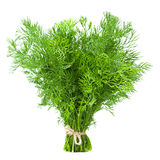 Dill herb isolated Royalty Free Stock Images