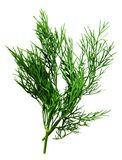 Dill herb isolated on the white Royalty Free Stock Photo